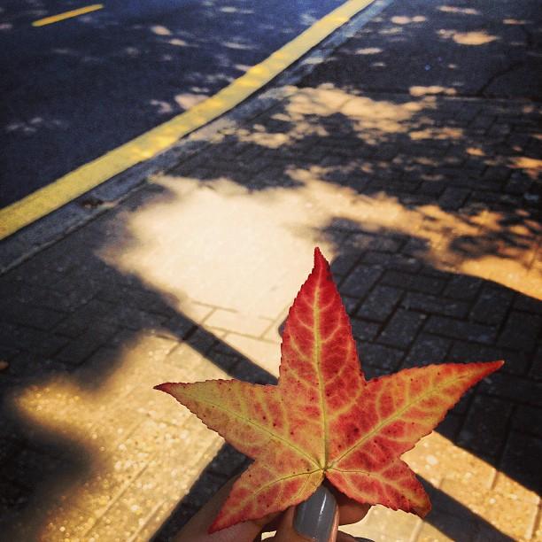 photo autumn.jpg